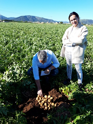 Import potatoes from Mallorca 2019